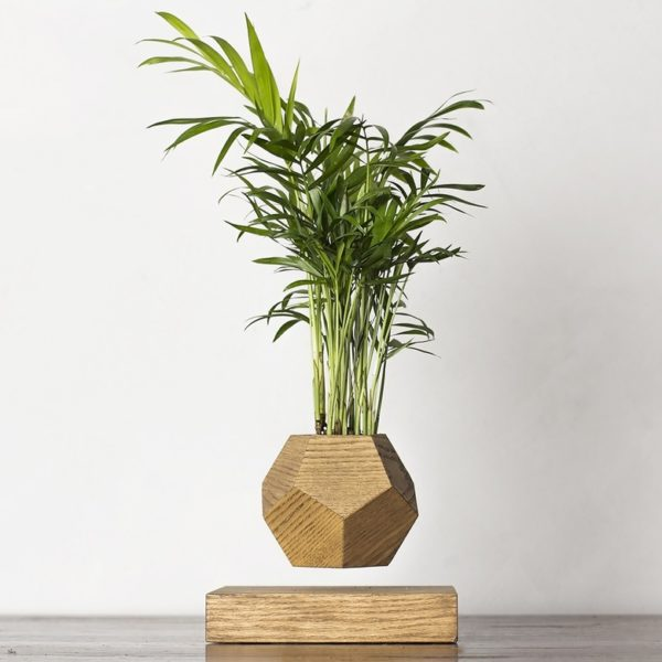 Леплант Wood Хамедорея